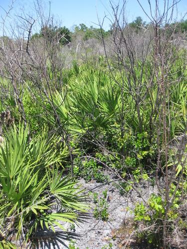 Wilde Landschaft in Florida