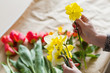 Quadro yellow narcissus in woman hands. assortment of spring flowers on craft paper background. floristry and bouquet arranging.