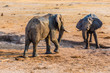 Quadro Two elephants fighting over a small amount of water during a drought in Hwange National Park, Zimbabwe. September 9, 2016.