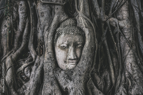 Canvas Boeddha Head of Buddha statue in the tree roots