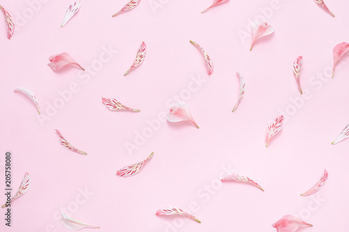 Foto Murales Flower petals on a pink background. Gentle spring background