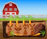 A Rabbit Hole Under Carrot Farm