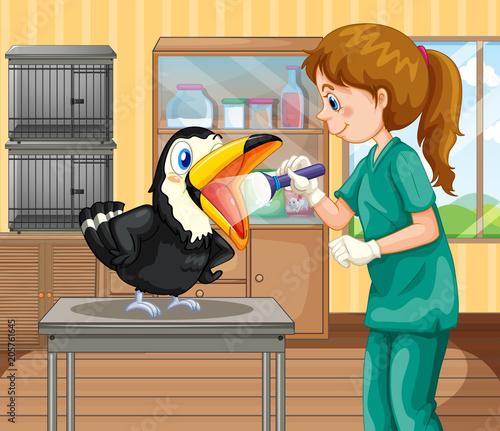Fototapeta A Vet Doctor Checking a Hornbill