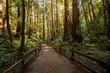 Quadro Muir woods National Monument near San Francisco in California, USA