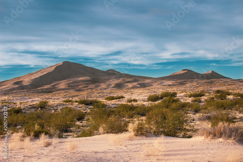 Fotobehang Blauwe jeans Desert Sand Dunes and Cactus Landscape