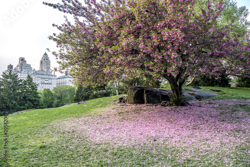 Foto Murales Central Park, New York City spring