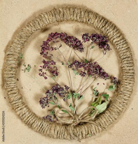 Foto Murales Herbarium. Oregano. Dry plants. Scrapbooking.