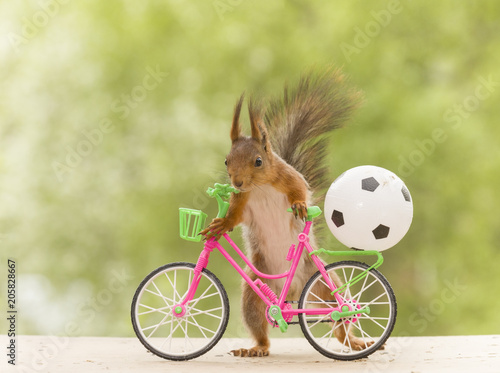 red squirrel with a cycle and a football - 205828667