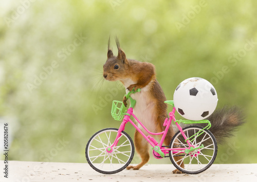 red squirrel with an cycle and a football - 205828676