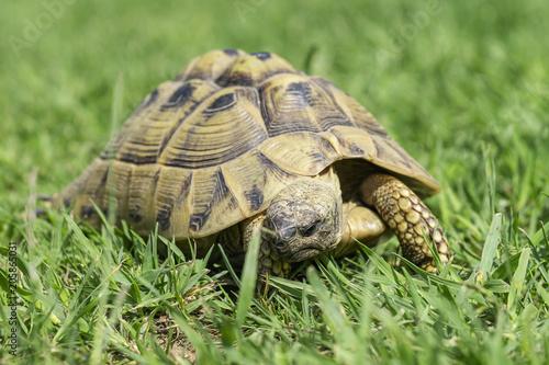 Aluminium Schildpad Landschildkröte