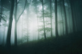 tree in foggy forest fantasy landscape - 205905009