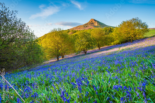 Bluebell Slope and Roseberry Topping / Newton Wood and Roseberry Topping, a distinctive hill in North Yorkshire, are popular with walkers and ramblers