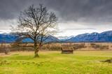 Murnauer Moos bog in Bavaria - 205912404