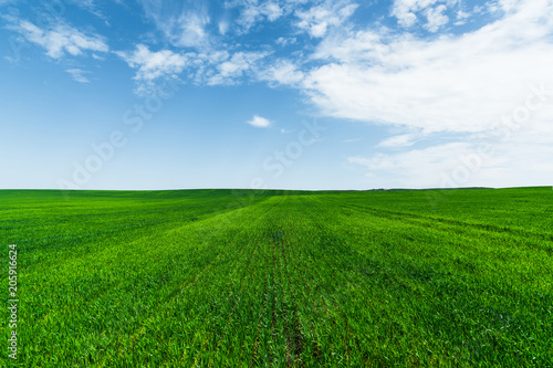 Fotobehang Groene A green wheat field against a blue sky with clouds. Juicy Ful Color Green
