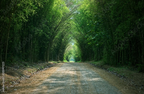 Aluminium Bamboe Tunnel bamboo tree and walkway : Thailand