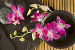 Zen Stones and Orchid flowers floating in harmony