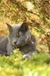Quadro Beautiful cat