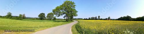 Panorama in Feld und Wiese - 205938651
