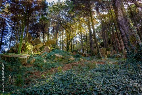 Aluminium Weg in bos Magic woods, Sintra, Portugal