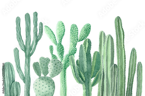 Watercolor Cactus and Succulents - 205956466