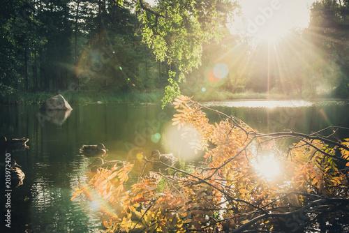 Fotobehang Beige The Duck Pond