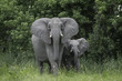 Quadro Mother elephant with baby