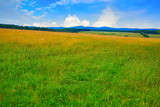 Green meadow in Harz forest of Germany - 205984014