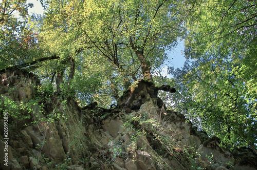 Plexiglas Pistache Осенний лес на Кавказе,Краснодарский край, Россия