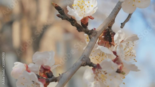 Spring flower on tree. Macro nature composition.