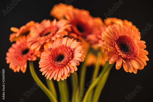 Foto Murales bouquet with beautiful orange gerbera flowers, isolated on black