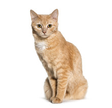 Mixedbreed Cat Sitting Against   Sticker