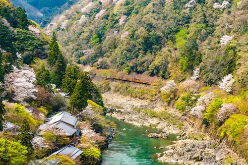 Fotobehang Kyoto 京都の春の風景 嵐山の満開の桜 京都 日本