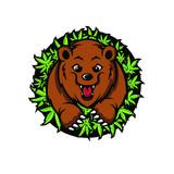 Bear Cannabis Mascot Design Vector