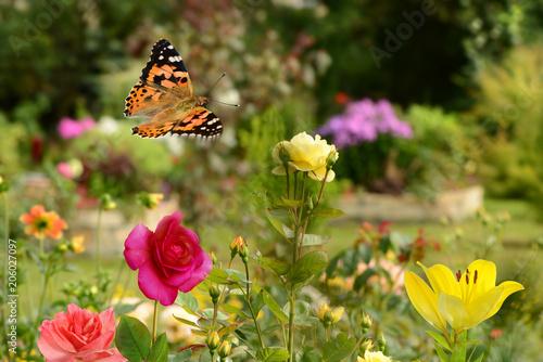 Plexiglas Geel Schmetterling 416