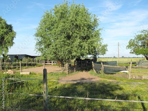 Plexiglas Pistache paesaggio agricolo