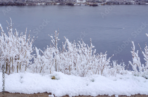 Fotobehang Lente Branches of shrubs covered with snow after heavy snowfall on spring day with a river background