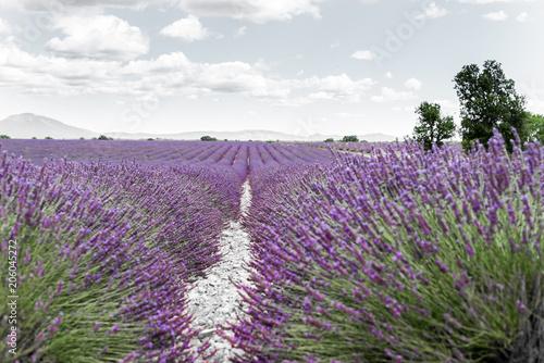 Aluminium Lavendel lavande violette - provence - France