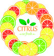 Collection of citrus slices - orange, lemon, lime and grapefruit, icons set, colorful isolated on white background.