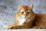 Portrait of a young cat - 206084694