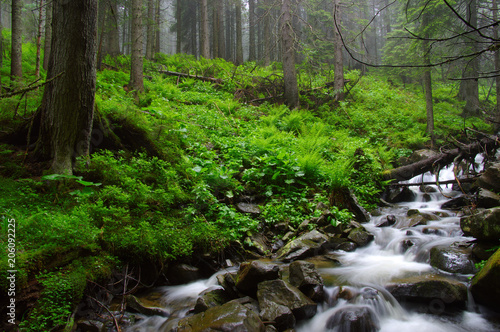 Fotobehang Bergrivier River in the woods