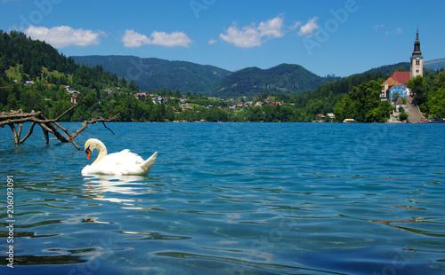 Aluminium Zwaan Swan on blue lake