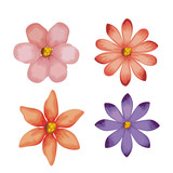 beautiful flowers set decorative icon vector illustration design