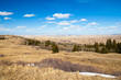 Spring grass in Cypress Hills Interprovincial Park, Alberta, Canada