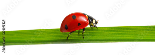 red ladybug on grass