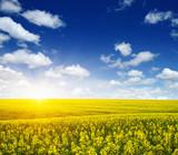 golden field on sky - 206097415