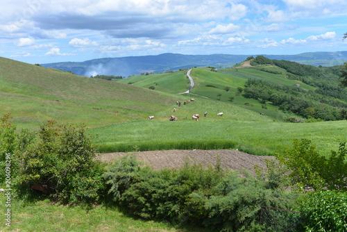 Fotobehang Olijf Hen,farm,agricolture,grass,farmaland,eggs,animals,panorama,wood,