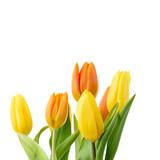 Gelbe und orangene Tulpen isoliert - 206103055