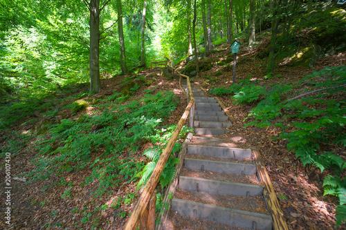 Aluminium Weg in bos Wald