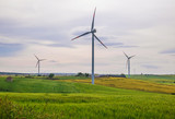 Puglia (Italy) - Wind farm with wind turbines and expanses of wheat - 206114614