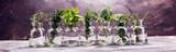bunch of garden fresh herbs on grey board. - 206116471